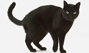 blackcatjpg