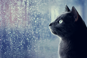cat-watching-rain