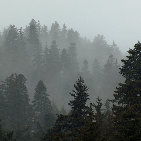 Evergreen_Forest_Background_by_StoicLewy-309